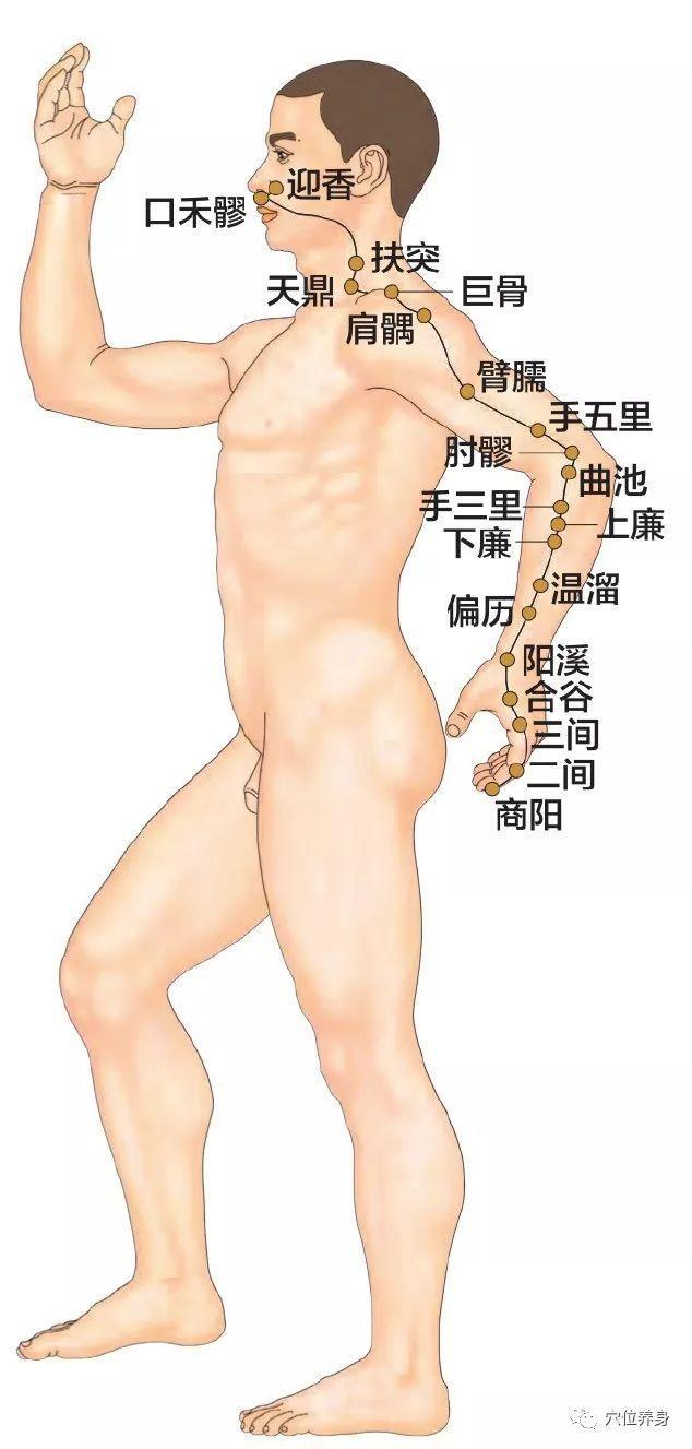活跃的人体十二经脉图解